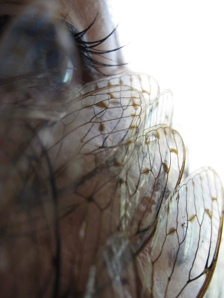 Cicada Pupil - Male and Female, Japan 2011